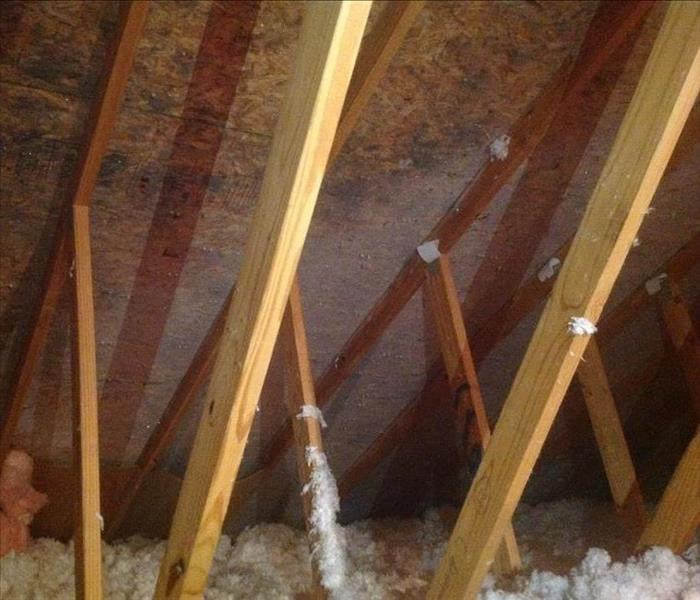 Visible Mold on Decking in an attic