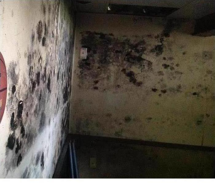 Walls covered in mold from floor to ceiling