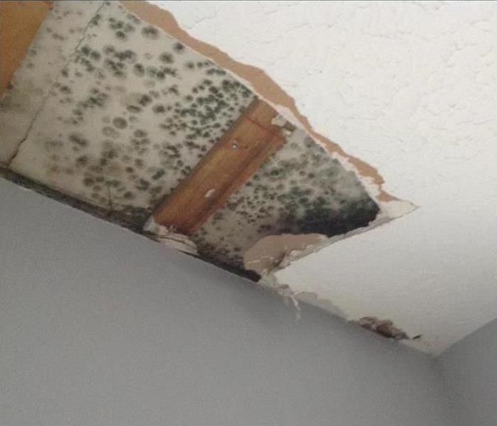 Mold Remediation Eaton County Residents: Follow These Mold Safety Tips If You Suspect Mold