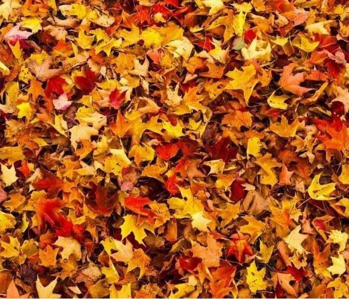 Pile of beautifully bright fall colored leaves