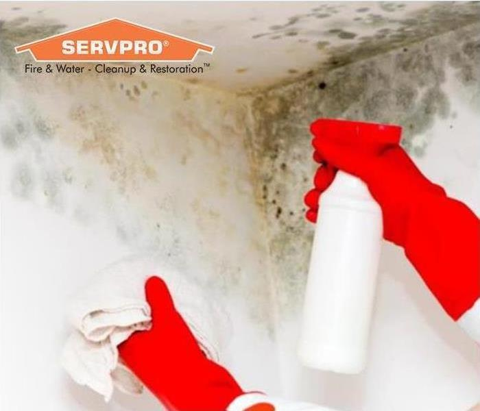 SERVPRO professionals cleaning mold